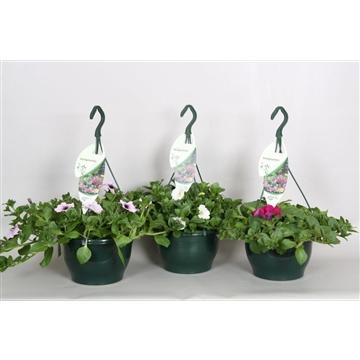 Petunia gemengd hangpot 23 cm