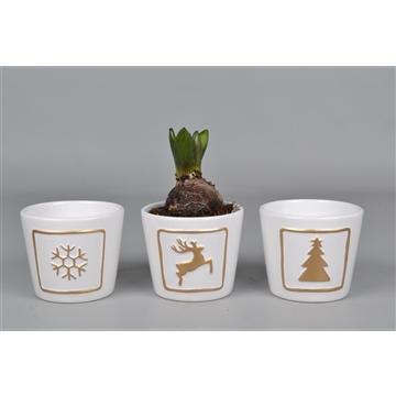 Hyacint in kerstpot wit goud