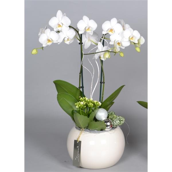 Keramiek met orchidee arrangement fc floraxchange - Orchideen arrangement ...
