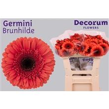 Germini water Brunhilde