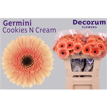 Germini water Cookies N Cream