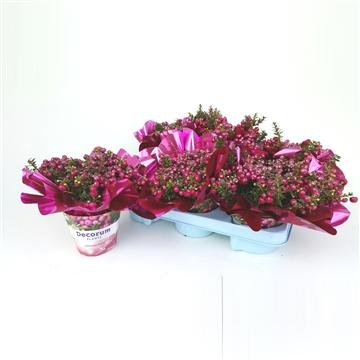Kerst Pernettya Decorum P10,5 met glitters Roze