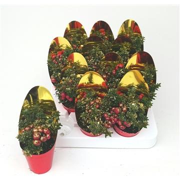 Kerst Pernettya P7 met Spiegelhoes en Glitters Goud
