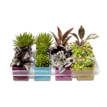 Plastic magnetic pots in refill with green MiIX