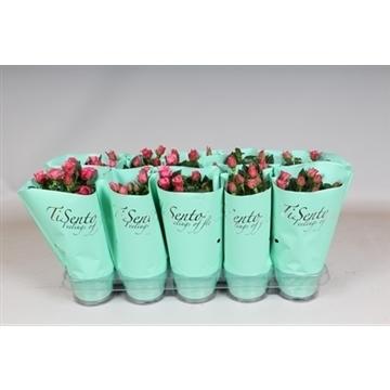 TiSento potroos 10.5 cm roze in mint