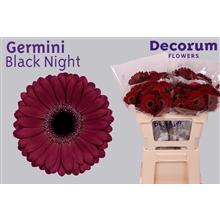 Germini water Black Night