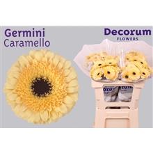 Germini water Caramello