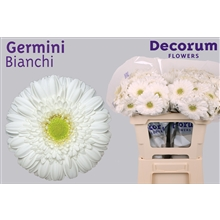 Germini water Bianchi