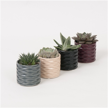 Deluxe ceramic with Succulent