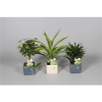 Collectie Aviva - Groenmix Nr. 10 in Jeans pot (Decorum)