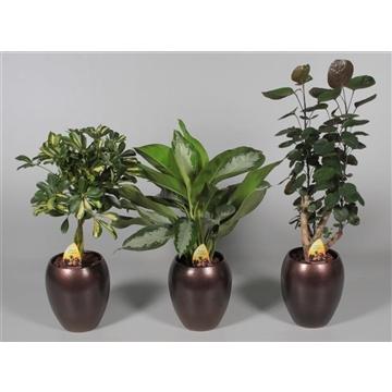Collectie Alysia - Groenmix 3 soorten Milaan  in vaas Talitha
