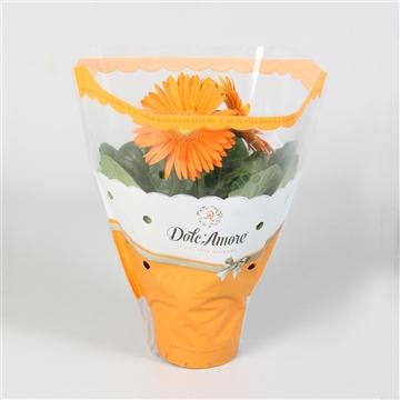 Gerbera Dolc Amore Oranje 12 cm
