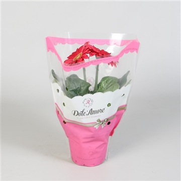 Gerbera Dolc Amore Roze 12 cm