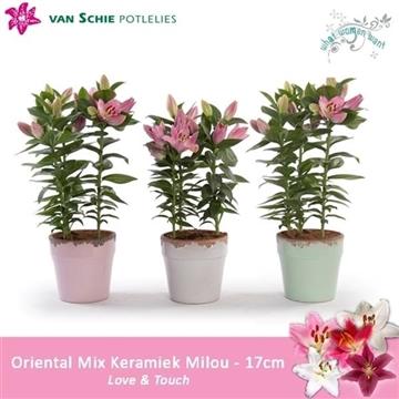 Oriental Mix 17cm keramiek Milou