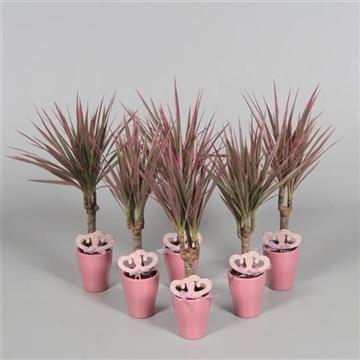 Tiny Tummy Make-Upz in roze keramiek met bijsteker (Moederdag) (Decorum)