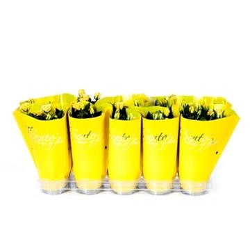Tisento roos 10,5 cm geel