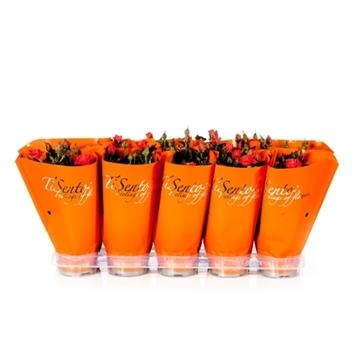 Tisento roos 10,5 cm oranje