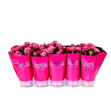 Tisento roos 10,5 cm roze