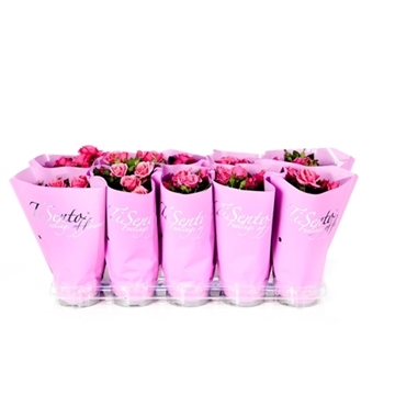 Tisento roos 10,5 cm roze pastel