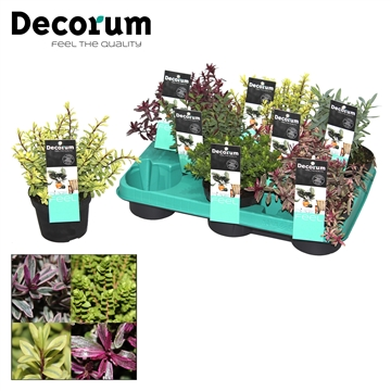 Hebe Magiccollor Mix Decorum P10,5