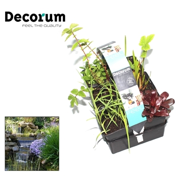 Waterzuiverende planten 6-pack Decorum P9