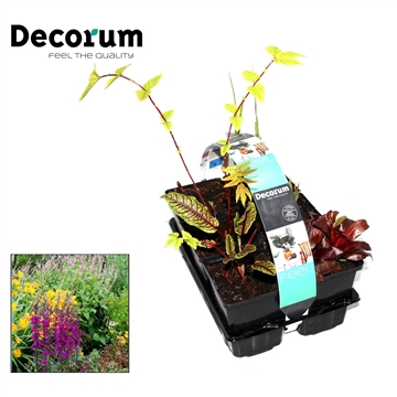 Moerasplanten 6-pack Decorum P9