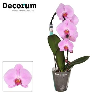 Decorum Cascade Pink Naomi