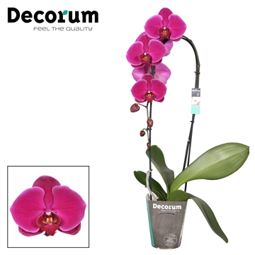 Decorum Flamingo Cascade