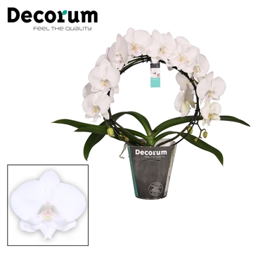 Decorum Mirror Biglip