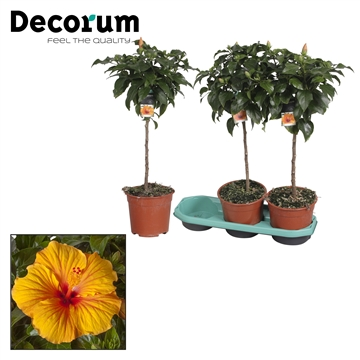 Hibiscus op stam - 19 cm - Safari (orange/yellow) - Decorum