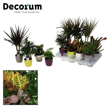 Keen on Green mix 7 cm in Sara pot (Decorum)