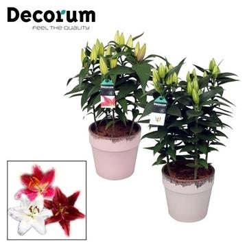 Lilium Oriental 19cm Keramiek Milou