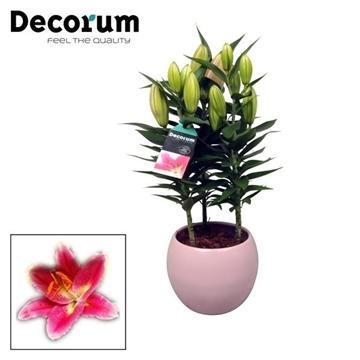 Lilium Oriental 3pp Keramiek Bol