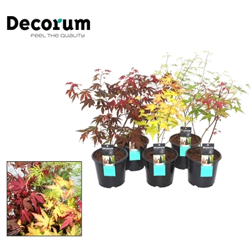 Acer Mix Decorum P15