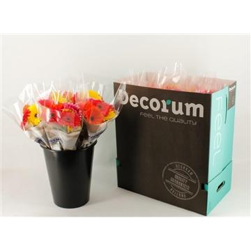 Gerbera Mixbos á 7 flowers (Price per bunch)