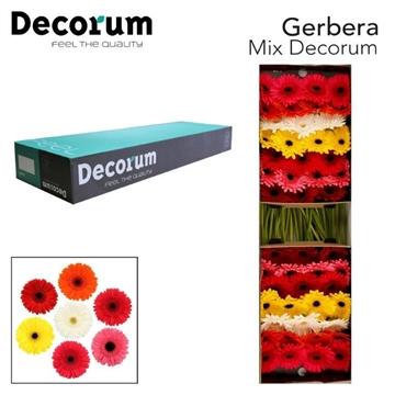 Gerbera Mix Decorum