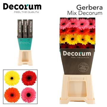 Gerbera Diamond Mix Decorum