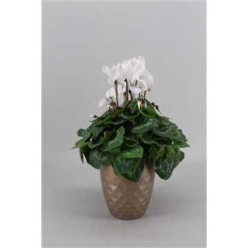 Collectie 'Alysia' - Cyclamen in Diamond