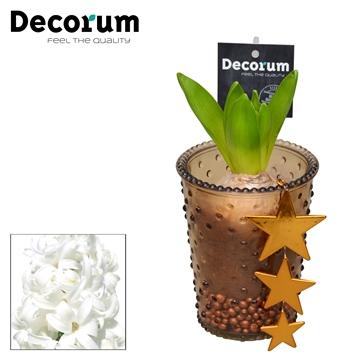 Hyacint Ayden HL17039WP [COFFEE & CHAMPAGNE]