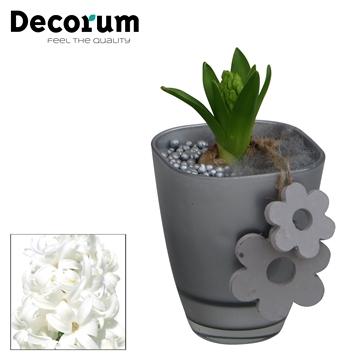 Hyacint Bombay HL15093WP [BLACK & WHITE]