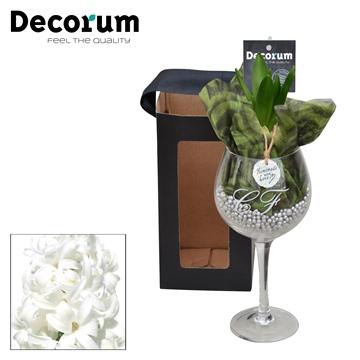 Hyacint Wijnglas HL16061WP [BLACK & WHITE]
