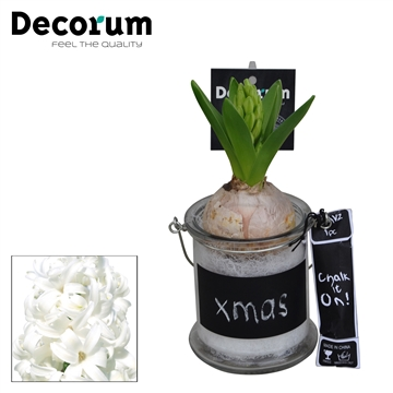 Hyacint Windlichtje Krijt HL15912WP [BLACK & WHITE]
