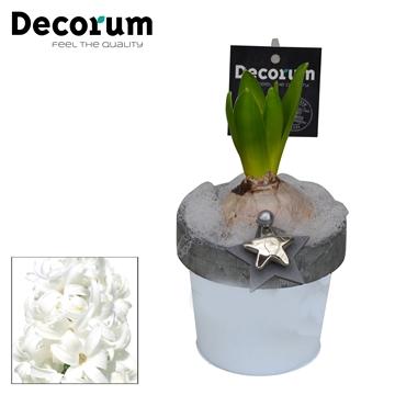 Hyacint Bucket & Border Mini HL17512WP [BLACK & WHITE]