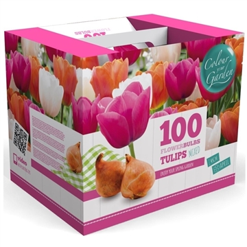 2 m2 Spring Colours Tulip Triumph Pink/Orange/White Mix