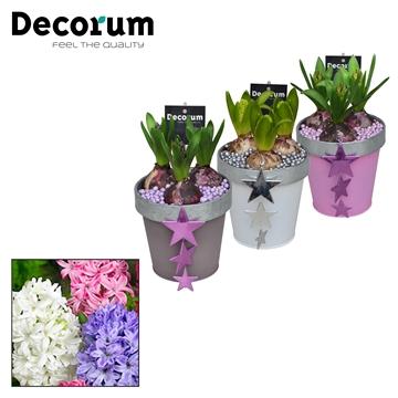 Hyacint Bucket & Border Maxi HL17522 [LOVELY COLORS]