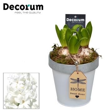 Hyacint Bucket & Border Maxi HL17523WP [BLACK & WHITE]