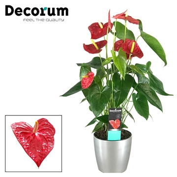 Anthurium Dakota pot 17 keramiek  zilver