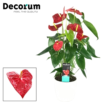 Anthurium Dakota pot 17 keramiek wit