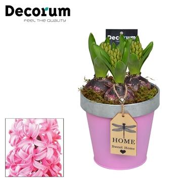 Hyacint Bucket & Border Maxi HL7523PP [SOFT PINKS]