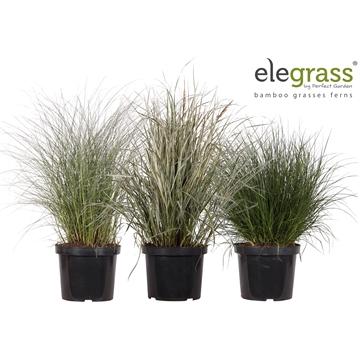 Grassen mix laag los
